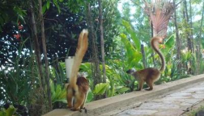 Balades à la jounrée Rencontre des lémuriens Domaine de Florette