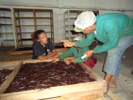 Séchage échaudage de la vanille Domaine de Florette